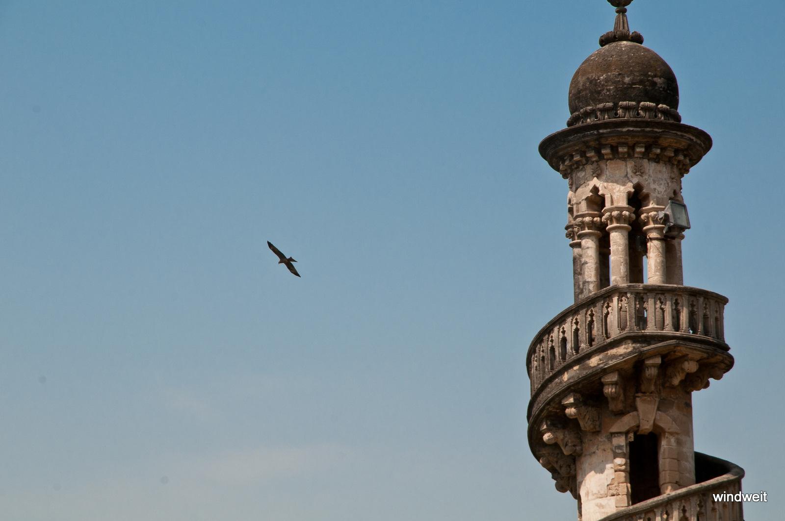 Ein Adler neben dem Turm