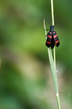 Weiss jemand, wie dieser Käfer heißt