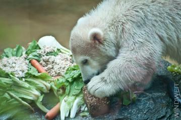Eisbärjunge Anori